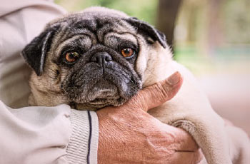 Aging in Place - Benefits of Pet Ownership for Seniors